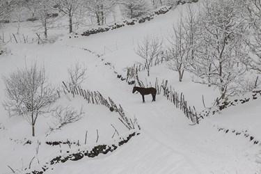 بارش برف بهاری در چالوس