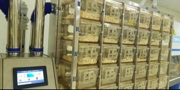 راه اندازی سیستم تولید و پرورش موشهای SPF در موسسه رازی