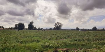 پیشبینی بارشهای پراکنده در مناطق شرقی استان/سرعت باد تا 90 کیلومتر بر ساعت هم رسید