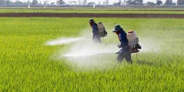 اهمال جهاد کشاورزی خراسان شمالی در توزیع سموم شیمیایی و کاهش تولید