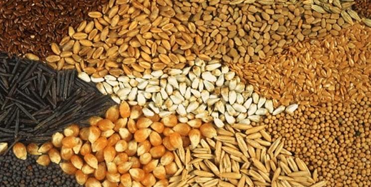 افزایش قیمت خوراک دام در بازار جهانی/ پاسکاری تصمیمات بین وزارت خانهها معضل بخش تولید
