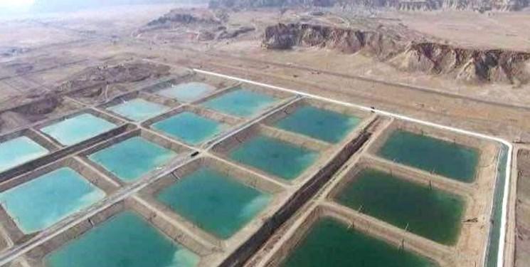 انتقاد از نگاه صرف آماری به تولید آبزیان در هرمزگان/ رقابت در بازارهای هدف سخت شده است