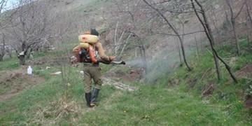 مبارزه با ملخها در۳۰۰هکتار از اراضی فشافویه/ شهرداریها برای ملخهای داخل شهر اقدام کنند