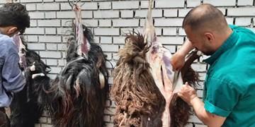 اجرای طرح «نذر قربانی» در خراسانجنوبی/ برپایی ۳۱۲ پایگاه ثابت و سیار