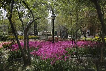 لالههای باغ ایرانی / ده ونک تهران