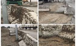 ملخهای صحرایی به خراسانجنوبی رسیدند/ شناسایی ۳  کانون آلوده در «نهبندان»