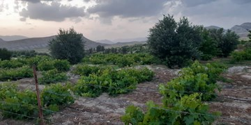واگذاری ۲۴هکتار از اراضی ملی اردل به طرح توسعه باغات
