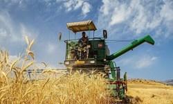 آغاز خرید گندم در گلستان/ پیشبینی تولید بیش از یک میلیون و ۲۰۰ هزار تن گندم در گلستان
