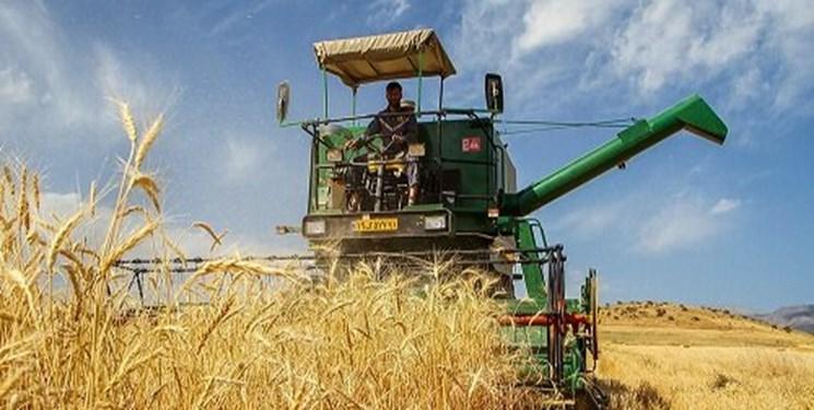 پیش بینی برداشت 320 هزار تن گندم از اراضی استان ایلام
