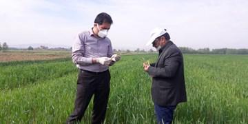 احتمال شیوع عوامل خسارتزای گیاهی در سال جاری