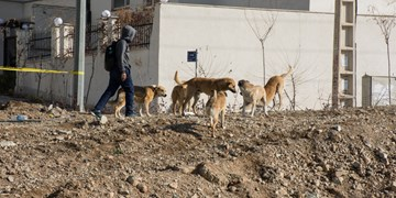 ساماندهی سگهای بلاصاحب در رباطکریم