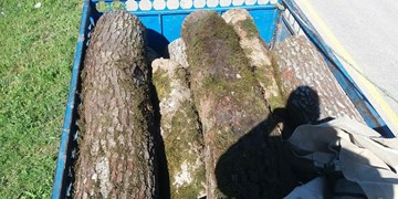 کشف ۳۰ تنی چوب قاچاق در آستانهاشرفیه