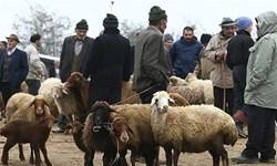 تشدید نظارتهای بهداشتی بر کشتارگاههای زنجان/ گوشت را از واحدهای معتبر تهیه کنید