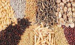 قیمت انواع بذر مشخص شد