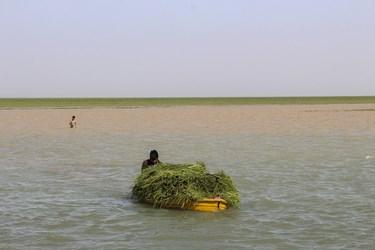 وسعت دریاچه هامون در زمان پرآبی ۵۶۶۰ کیلومتر مربع است که از این مقدار ۳۸۲۰ کیلومتر مربع متعلق به ایران و بقیه متعلق به افغانستان است.