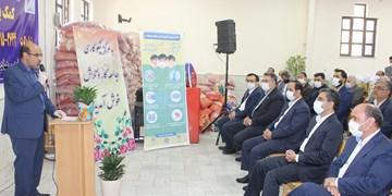 آغاز توزیع اقلام بستههای حمایتی ویژه کارگران در مشهد