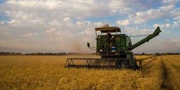 کاهش ۱۰ درصدی کاشت گندم در استان یزد/ ۹ هزار و ۱۰۰ هکتار زیرکشت گندم رفته است