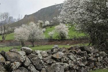 جنگل های غرب مازندران
