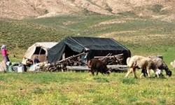خورشید چادر عشایر را روشن کرد/ تولید 11هزار تن گوشت قرمز و  32 هزار تن شیر خام توسط عشایر آذربایجان