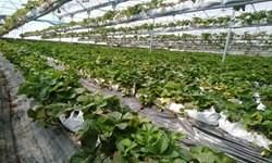 ۴۶ طرح کشاورزی در استان یزد به بهرهبرداری رسید