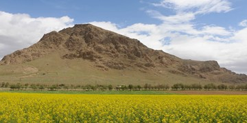 دشت زیبای کلزا در چهارمحال وبختیاری