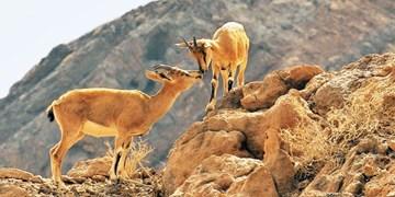 ممنوعیت ورود به مناطق حفاظتشده ملایر تا یکماه