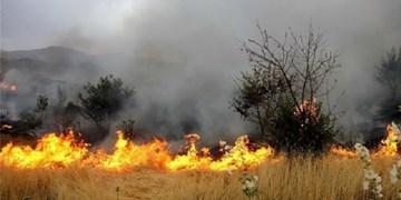 خسارت 3 هزار میلیاردی «حریق» به کشاورزی «رودان»