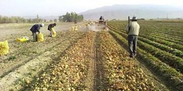 تهیه الگوی کشت دیم در 230 هزار هکتار از اراضی کشاورزی قزوین