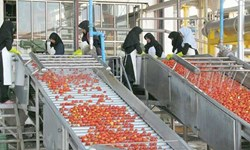صنایع تبدیلی حلقه مفقوده اقتصاد کشاورزی/ سود هنگفت دلالان از خام فروشی محصولات