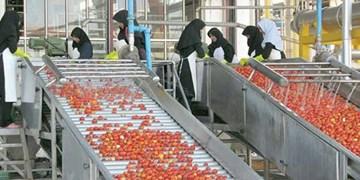 صنایع تبدیلی حلقه مفقوده اقتصاد کشاورزی