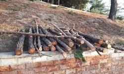 ذبح درختان با وعده پوچ/ 2 سال چشمانتظاری برای پارک بانوانی که ساخته نشد