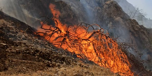 مراتع روستای گلابر در آتش سوخت
