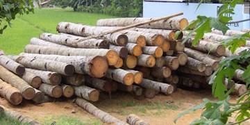 برخورد با قاچاق چوب در تویسرکان/  ارجاع پرونده تعدادی از متخلفان به دستگاه قضا