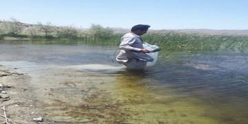 رهاسازی بیش از ۲۰ میلیون بچه ماهی سفید در رودخانههای لنگرود