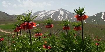 «سهند» عروس کوههای ایران+ تصاویر