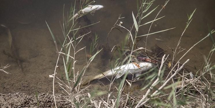 آلودگی زیست محیطی «رودخانه قره سو»