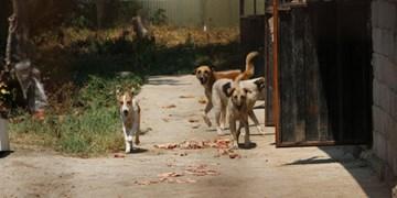 دیلم در قُرُق سگهای ولگرد/ چهره زشت شهر توریستی