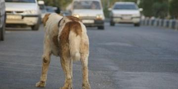 فارس من| شهرداری مبارکه ماجرای سگکشی را رد کرد/ دعوت از اصحاب رسانه برای بازدید از کمپ ویژه