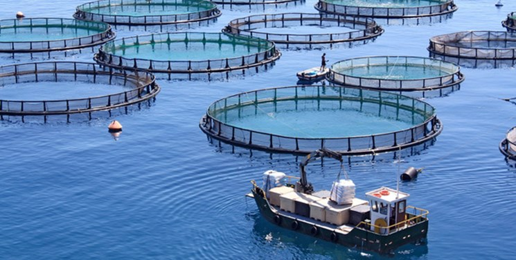 آمادگی قفسهای دریایی گیلان برای پرورش ۱۰۰۰ تن ماهی
