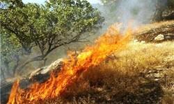 گدازه سرخ آتش  بر دامان سبز طبیعت پلدختر/ منابع طبیعی که در خرمن بیتدبیری میسوزد
