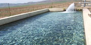 رهاسازی ۶۰ میلیون قطعه بچه ماهی استخوانی در رودخانه سفیدرود