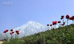 قله دماوند وقفی نیست/ تکذیب اخذ سند موقوفه برای بام ایران