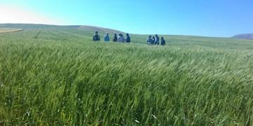 منتظر نظر کارشناسی در خصوص پرونده بذرهای نامرغوب هستیم/ 70 درصد زمینهای گندمکاران بندرگز سبز نشد