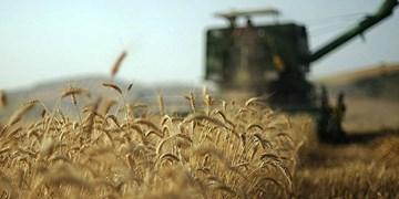 ایجاد ۴۲۵ شغل با ارائه تسهیلات به ۶ طرح شاخص کشاورزی در همدان