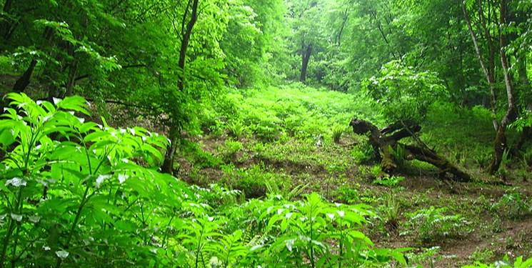 جنایت در جنگل/مسئولان سرگرم منطقه تجاری، مردم درگیر آب مسموم شده