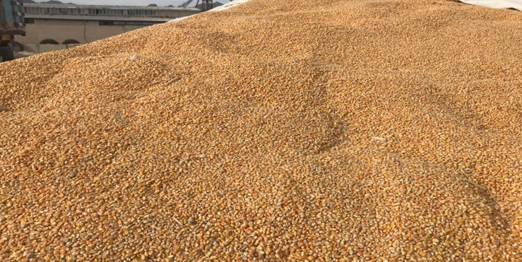 کاهش شدید قیمت گندم و خوراک دام در بازارهای جهانی