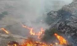 جنگلهای  ارژن و پریشان سوختند/ آتش دوباره به جان مراتع کازرون افتاد