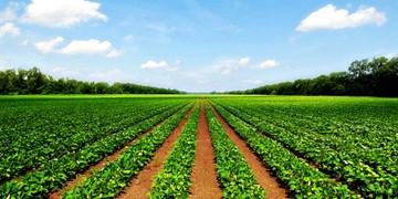 لزوم همیاری بانک کشاورزی برای توسعه کشاورزی پارسآباد/ تسهیلات ۱۷۰۰ میلیارد تومانی بانک کشاورزی برای توسعه گلخانهها