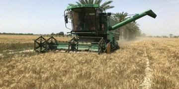 خرید تضمینی بیش از 2 میلیون تن گندم توسط شبکه تعاونیهای روستایی