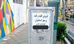 واکنش وزارت بهداشت به آگهیهای «فروش عضو»